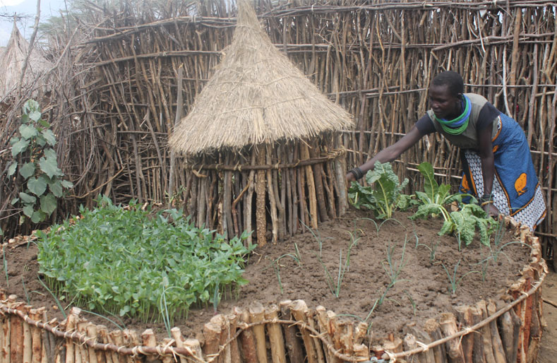 Keyhole gardens revolutionise food growing in Uganda